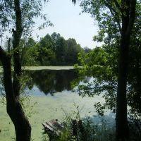 Озерце під Коропом, Короп
