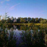 Ставок біля колхозу ім Горького, Корюковка