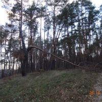 Корюковский лес, Корюковка