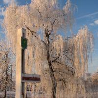 Зима, Куликовка