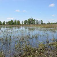 Плавни возле с.Сосница / Marshes near Sosnitsa, Сосница