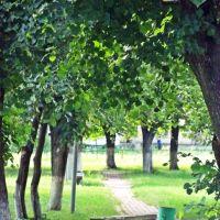 Центральный парк, Сосница