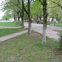 Парк в центре города, Щорс