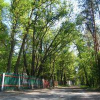 Дорога лісом до табору, Щорс