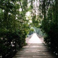 Кладка між Кутами та Вижнецею 2006 рік, Вижница