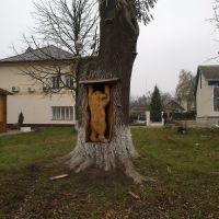Медведь в дереве. 19.11.2012, Глыбокая