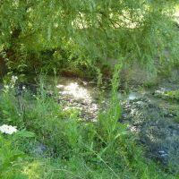 Верба біля річки., Сокиряны