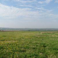 Field, Сторожинец