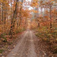 Дорога в лесу около с.Хоросница / The road in the forest near Horosnitsa, Береговое