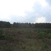 Опушка леса / Edge of a wood, Береговое