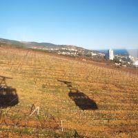 Пролетая над виноградниками, Кореиз