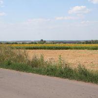 поле, Красногвардейск