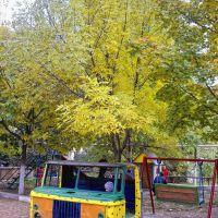 autumn colors, Мисхор