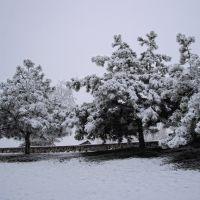 Сосны в снегу, Мисхор