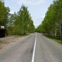 Bus Stop, Олива