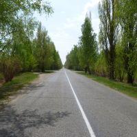 Road To Sloboda, Олива