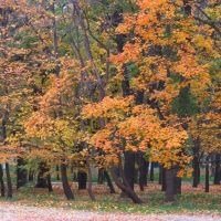 Парк в осени, Бершадь