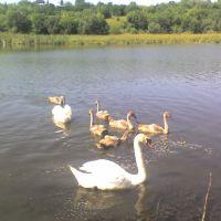 Лебеді на ставку, Вендичаны
