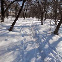 Снежная тропинка в парке (Зима 2014), Липовец