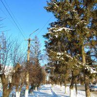 Снежная алея, Липовец