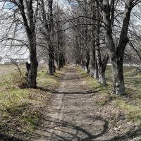 Дорожка среди деревьев, Липовец