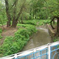 Дерло (в парку), Могилев-Подольский