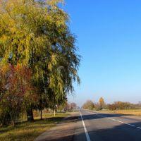 Трасса Луцк-Ковель прошла через парк и озеро поместья Вильгов., Голобы