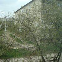 Вид с балкона двор, Голобы
