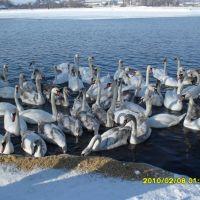 Зима 2010, Иваничи