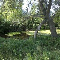 Здесь ловится крупный карась. 28.06.2012, Камень-Каширский