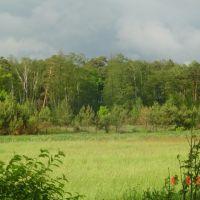 Червневий ліс, Киверцы