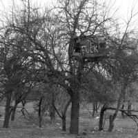 Будинки на деревах-2_ Tree Houses_2, Ковель