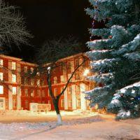 Ковель. Ялинка біля лікарні_Kovel. Christmas tree at the hospital, Ковель