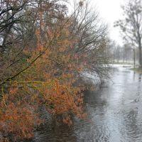 Руде, поросле мохом дерево над Турією_ginger tree with moss on the branches above the river, Ковель