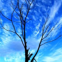 Dead Tree, Луцк