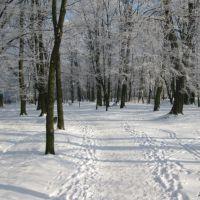 Парк, Любешов