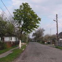 Любомль. Завальска вулиця., Любомль