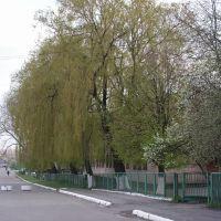 Любомль. Поштова вулиця., Любомль