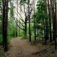 Ліс біля ставів, Маневичи