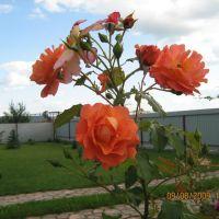 Роза, Турийск