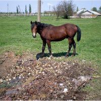 Конь, Апостолово
