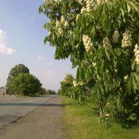 Цветут каштаны, Брагиновка