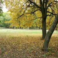 В парке, Верховцево