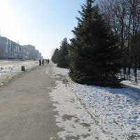 ул.Ленина,алея ил ёлок,очень красиво, Вольногорск