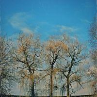 ивы зимой 2013, Вольногорск