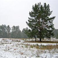 Снег и холод, день чудесный, Гвардейское