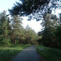 Самарский лес, Гвардейское