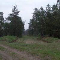 Окоп-укрытие в Самарском лесу, около Гвардейского, Гвардейское