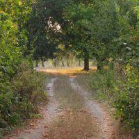 Дорога в парку, Горняцкое
