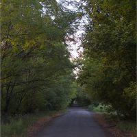 Дорога в посадке, Горняцкое